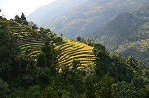 Рисовые террасы.  Базовый лагерь Аннапурны + сафари Читвана. Непал, Hikeup