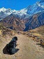 Пес кого-то очень ждёт в далёких Гималаях. Надеемся дождался. От MBC к ABC.  Світанок біля підніжжя Аннапурни. Непал, Hikeup