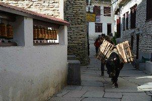 Транспортировка дров.  Вокруг Аннапурны. Непал - Перевал Торонг-Ла, Hikeup