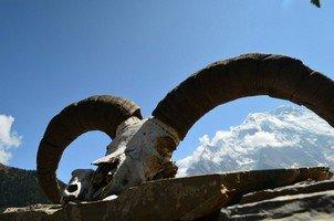 Рога горного козла.  Вокруг Аннапурны. Непал - Перевал Торонг-Ла, Hikeup