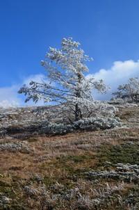 Сказочное дерево.  Пещеры Чатыр-Дага, Hikeup