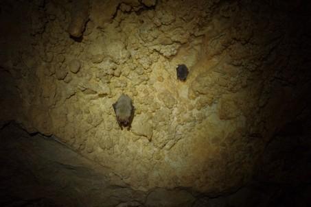 Летучие мыши в пещере Обвальная.  Пещеры Чатыр-Дага, Hikeup