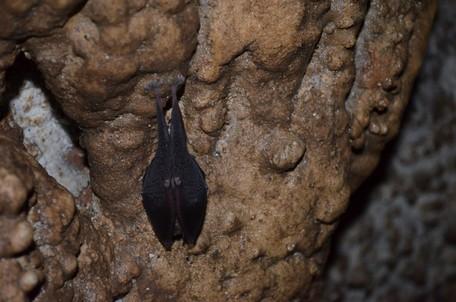 Спящая летучая мышь.  Пещеры Чатыр-Дага, Hikeup