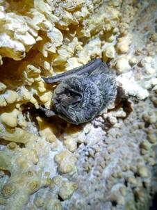 Летучая мышь.  Пещеры Чатыр-Дага, Hikeup