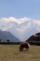 Крошка як на фоне гор.  Чарующий и таинственный Непал. Далеко и ещё дальше., Hikeup