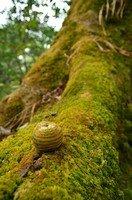Плод дуба в джунглях.  Тибетський Новий рік і Марді Хімал трек. Непал, Hikeup