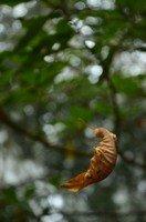 Падающий лист.  Тибетский Новый год и Марди Химал трек, Hikeup