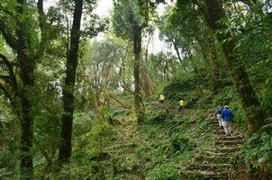 Тропа сквозь джунгли.  Тибетский Новый год и Марди Химал трек, Hikeup
