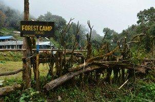 Forest Camp.  Тибетский Новый год и Марди Химал трек, Hikeup