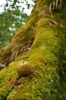Плод дуба в джунглях.  Марди Химал трек и рафтинг по Белой воде, Hikeup