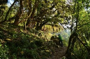 Тропа сквозь джунгли.  Марді Хімал трек та рафтинг по Білій воді. Непал, Hikeup