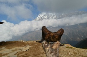 Рога горного козла.  Марді Хімал трек та рафтинг по Білій воді. Непал, Hikeup
