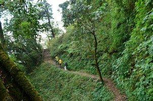 Лесная тропа.  Від Марді до Аннапурни. Непал, Hikeup