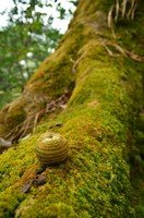 Плод дуба в джунглях.  От Марди до Аннапурны. Непал, Hikeup