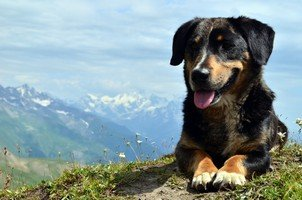 Сванский пес.  Сванский хребет и другие приключения. Грузия. Сванетия, Hikeup