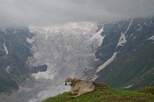 Ледник и собака Сванетии.  Поход по грузинскому Кавказу. Верхняя Сванетия, Hikeup