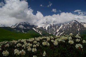 Цветущие рододендроны.  Поход по грузинскому Кавказу. Верхняя Сванетия, Hikeup
