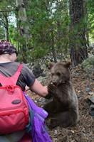 Медвежонок Балу.  Трекинг в Сванетии, Грузия, Hikeup