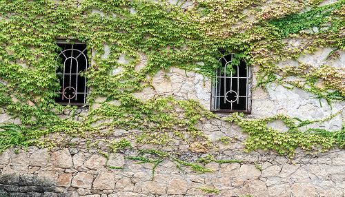 Виноград в Кутаиси
