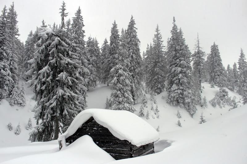 Полонына Головаческая зимой