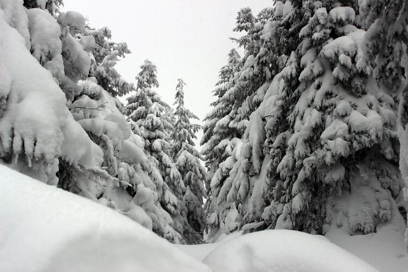 Настоящая зимняя сказка