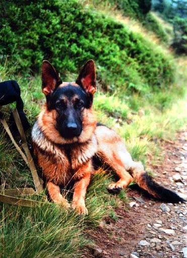Собака в походе (пешие горные походы с собакой)