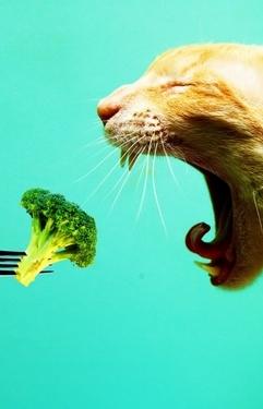 Вегетарианцы, худеющие и сыроеды в походе. Как готовить?